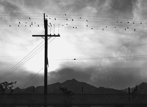 birds-on-wire-manzanar-skirball