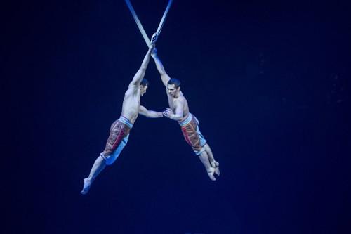 Cirque siamese