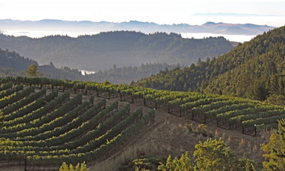 Fort Ross Vineyard_Coastal_Fog_2400x1442