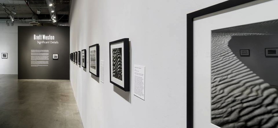 "Installation view, ""Brett Weston: Significant Details,"" April 17–September 11, 2016, Pasadena Museum of California Art, photo © 2016 Don Milici."